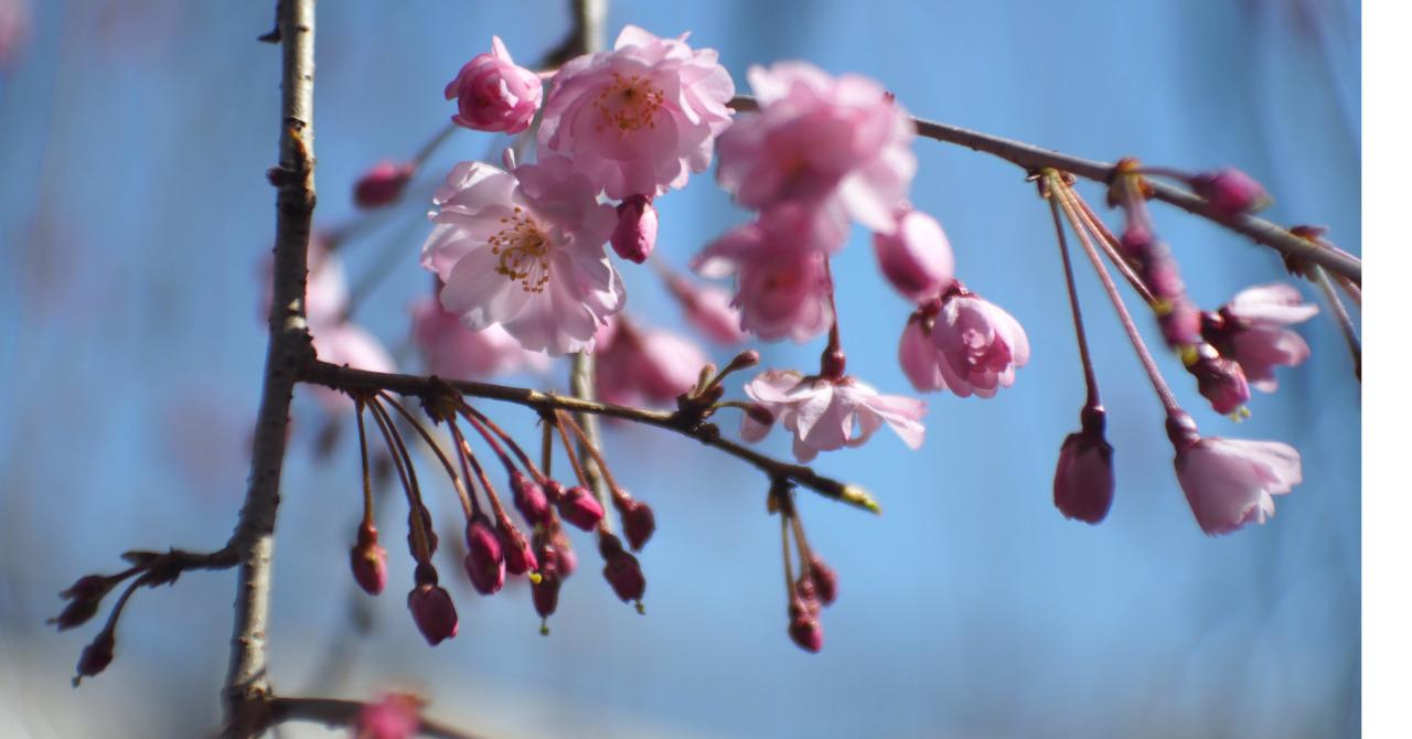 春分とスピリチュアル